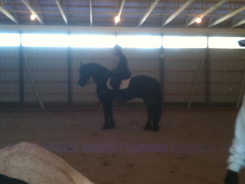 Friesian stallion and Joanie Henning